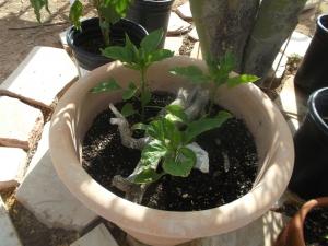 Plant in full sun?