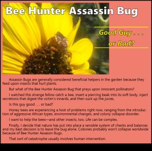 BeeHunterFlier_081715